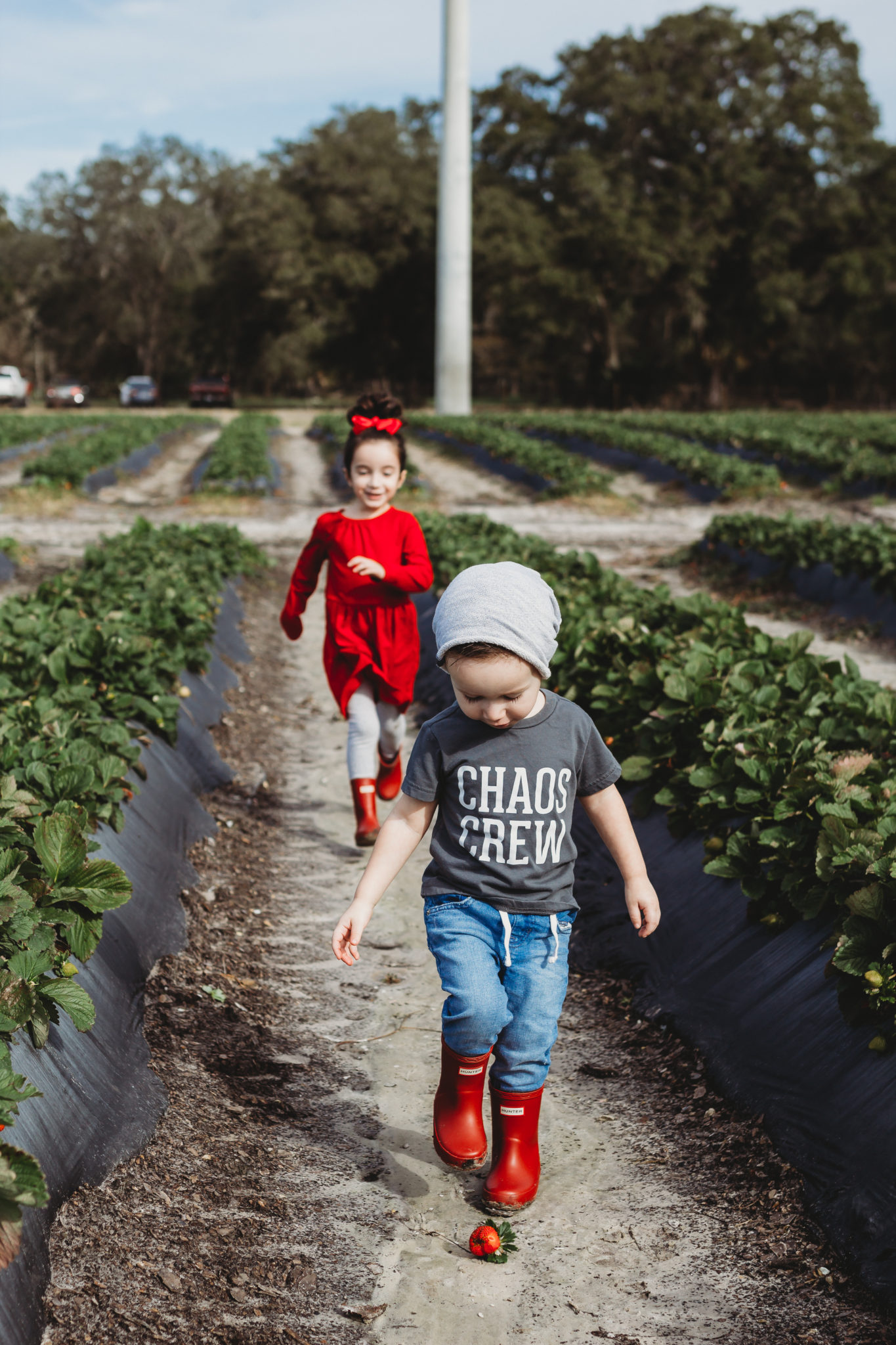 Reasons to go strawberry picking with your kids, fruit picking, strawberry season, U-Pick Farms, Outdoor Activities for Kids