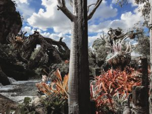 Guide to Animal Kingdom with Toddlers and Preschoolers, Pandora World of Avatar