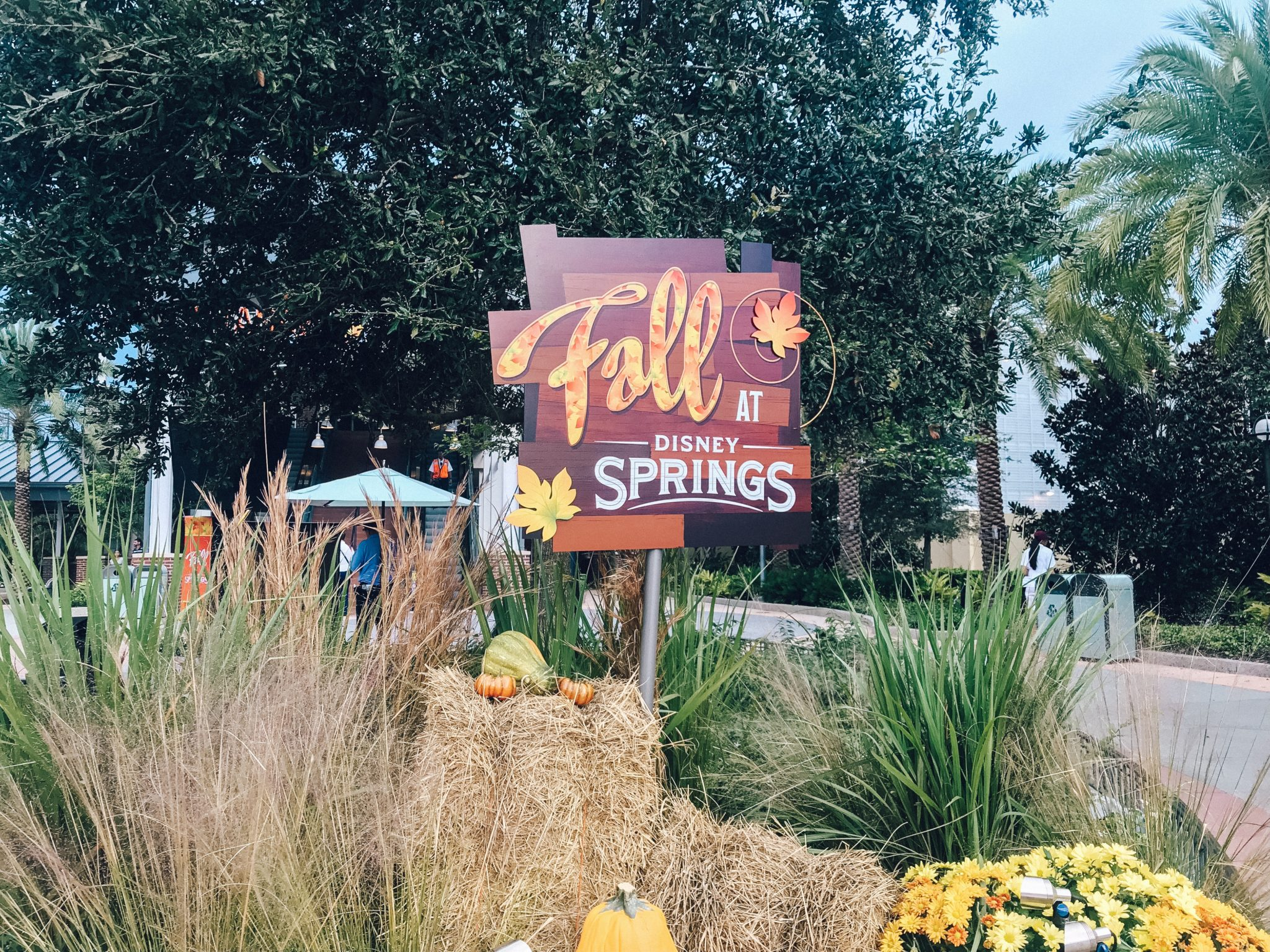 WHERE TO DINE AT DISNEY SPRINGS